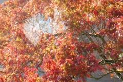 'Autumn Colour' by Jonathan Grant