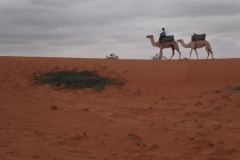 'Camels' by Camille Humphrey