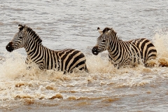 'Zebras Crossing' by Angela Rixon
